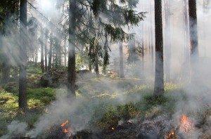 Fire Crews Fight Eagle Rock Brush Fire